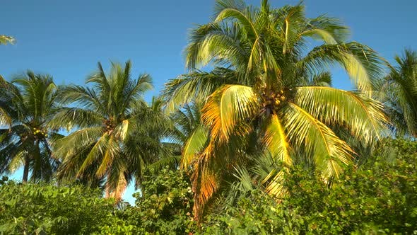 Tropical palm tree video