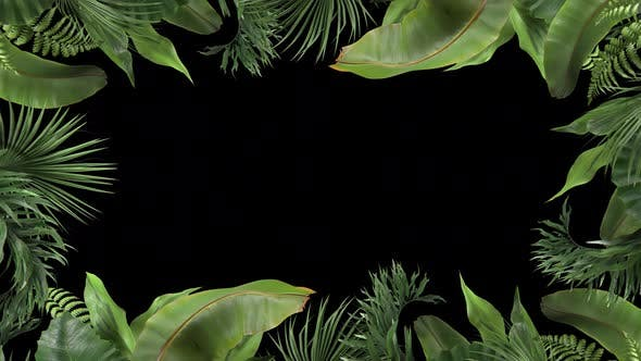 Frame From Tropical Plants Moving in the Wind in a Loop Animation with Alpha Channel