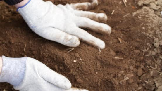 Thumbnail for Farmer Examining Soil in Hands Agriculture