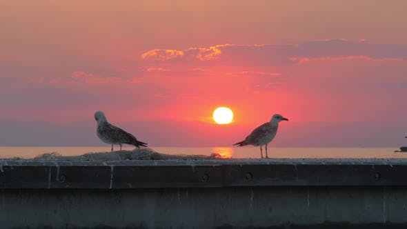 Thumbnail for Seagulls Against Sea and Sunset Background