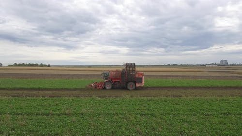 Sugar Beet Combine Harvester Harvesting