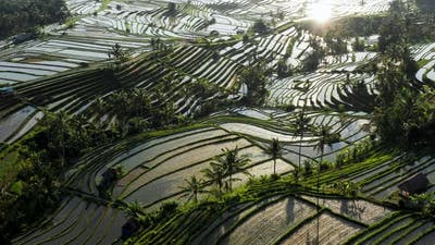 Aerial View Of Water Filled Rice Terrace At Morning. Beautiful Landscape Of Tropical Rice Fields