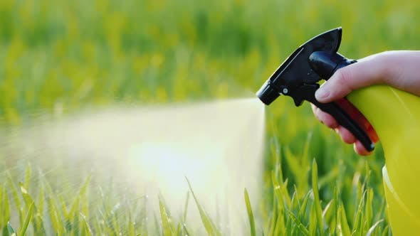 Thumbnail for Spray Liquid From the Hand Sprayer Onto the Lawn