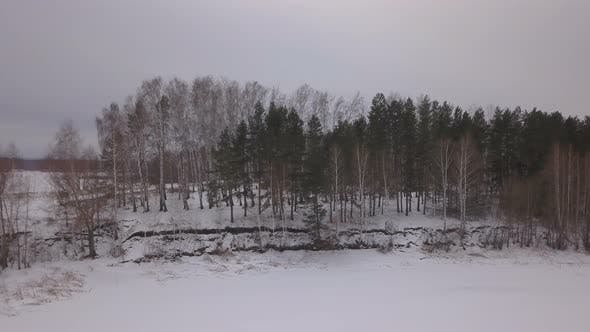 Thumbnail for Winter Forest