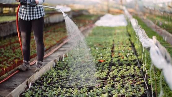Thumbnail for Female Gardener Watering Flowers Seedlings