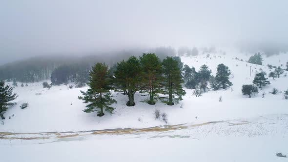 Thumbnail for Trees in Winter