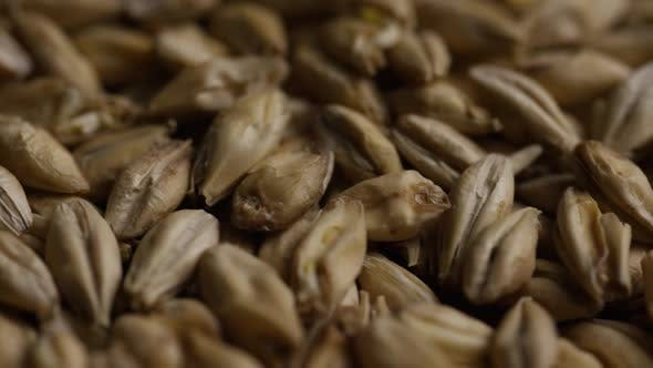 Rotating shot of barley and other beer brewing ingredients