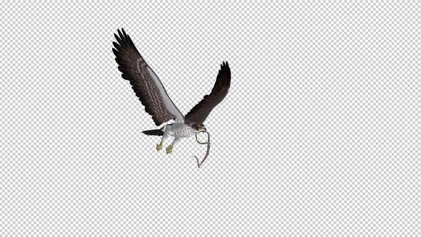 Snake Eagle with Serpent - 4K Flying Loop - Side Angle