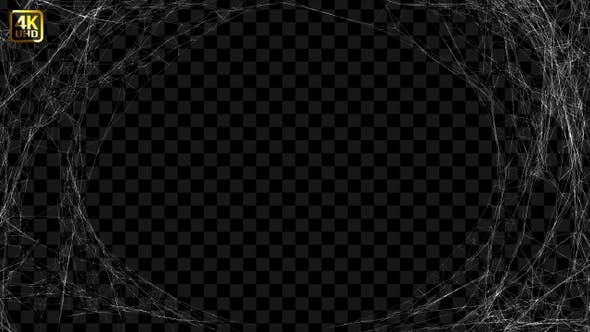 Thumbnail for Spider Web Background