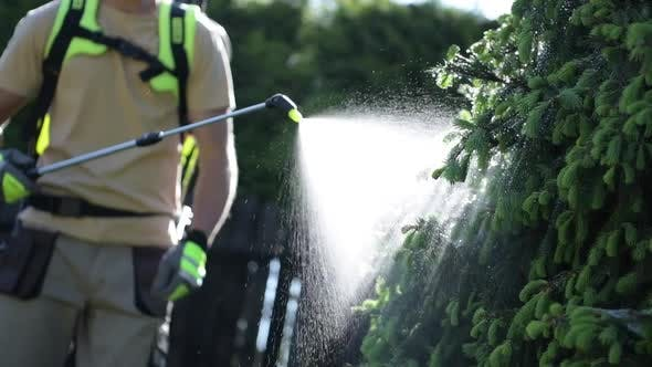 Gardener Fighting Insects in the Garden
