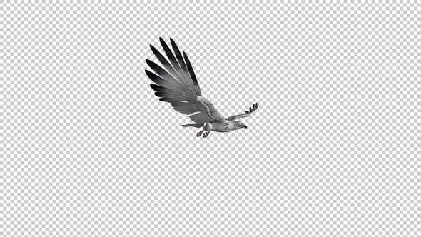 White Gyrfalcon - Gleit- und Fliegenschleife - Seitenwinkel