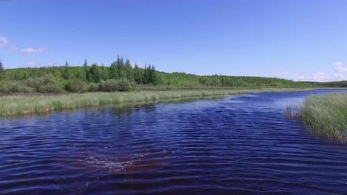 Lake surrounded by vegetation