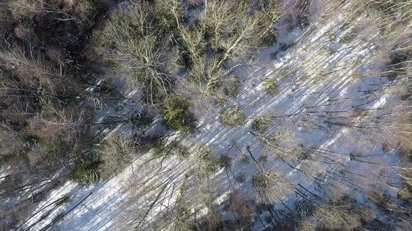 Cover Image for Mixed Forest in Winter, Aerial Shot