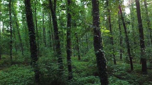Trostender Wald