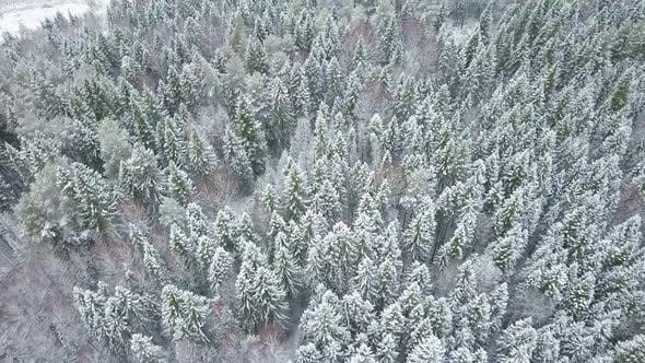 Thumbnail for Sky Above Snowy Pine Trees in Europe