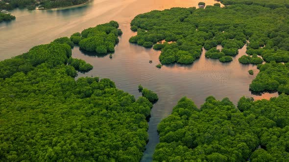 Thumbnail for Aerial View of Mangrove Jungles Forest and River on the Siargao Island, Philippines. Aerial Drone