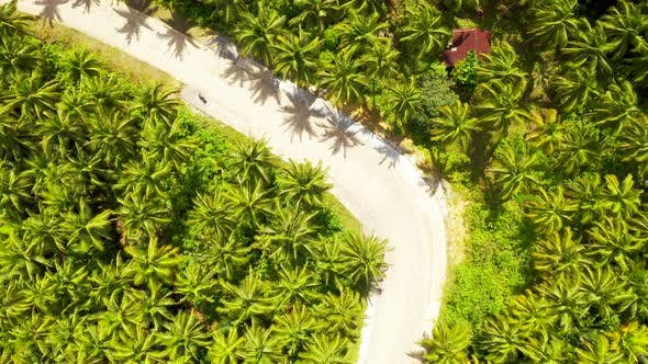 Thumbnail for Aerial View of the Road Somewhere Among Coconut Palms in Siargao, Philippines.