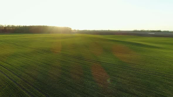 Grüne Wiese Landschaft