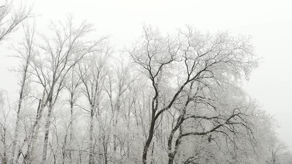 Thumbnail for Frozen Trees