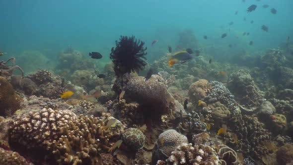 Thumbnail for Coral Reef and Tropical Fish. Philippines, Mindoro