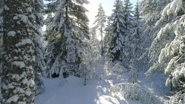 Cover Image for Winter Forest Landscape