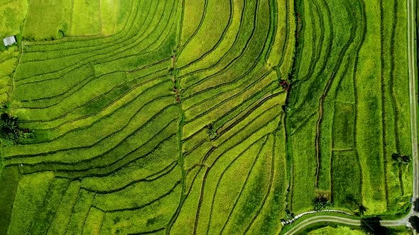 Thumbnail for Wonderful Rice Terraces