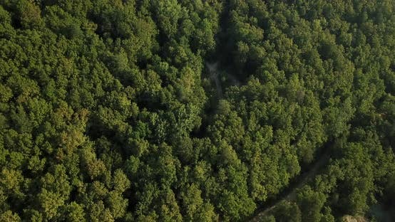 Aerial Top View of Caucasian Mountain Forest, Texture of Forest View From Above.