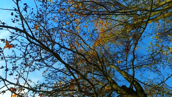 Branches of a Tree in Autumn and Sun