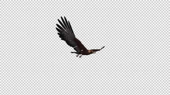 Golden Eagle - Gliding and Flying Loop - Side Angle