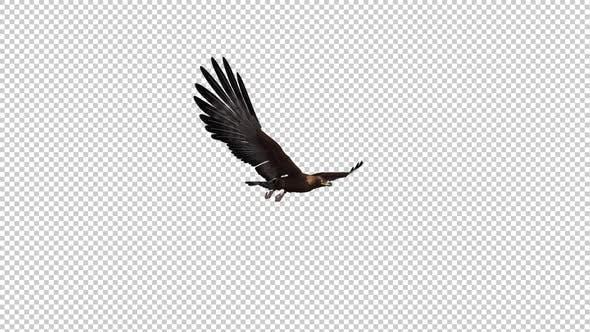 Golden Eagle - Gleit- und Fliegende Schleife - Seitenwinkel