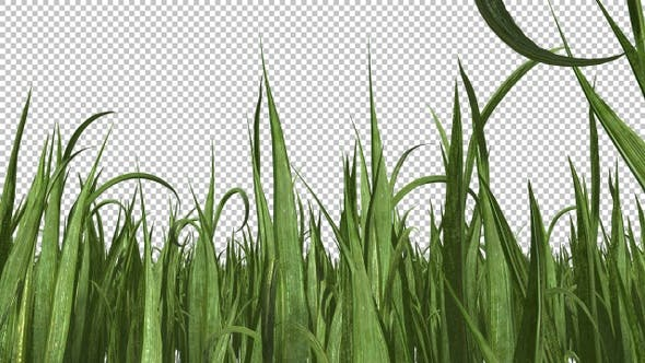 Thumbnail for Grass Growing Timelapse