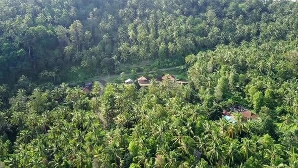 Thumbnail for Aerial Shot of Houses Surrounded by Dense Rainforest