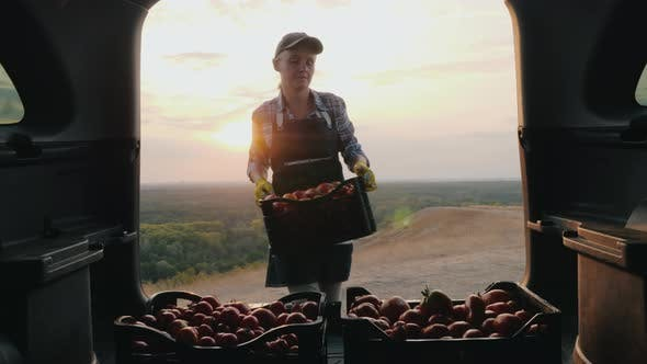 Thumbnail for Woman Farmer Loads Boxes with Tomatoes in the Trunk of a Car