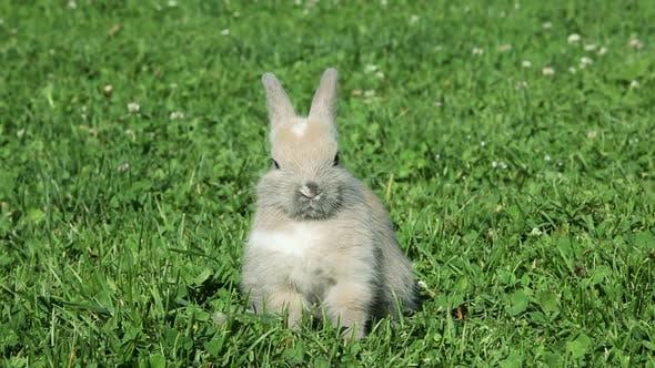 Thumbnail for Rabbit sitting on grass