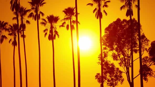Thumbnail for Sun Setting Behind Palm Trees