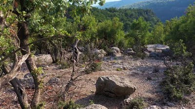Rocky Hill in the Forest