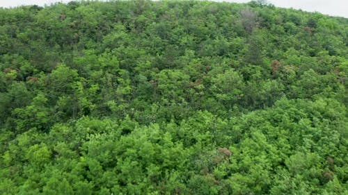 Flying Over a Dense Green Forest