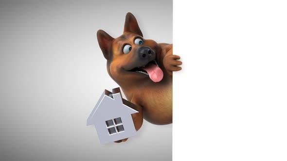 Thumbnail for German shepherd dog