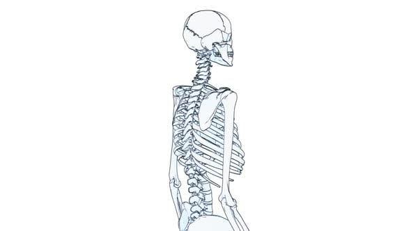 Thumbnail for Skeleton Draw