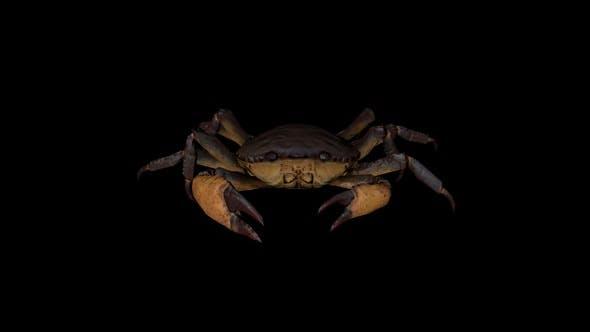 Crab Walk Front