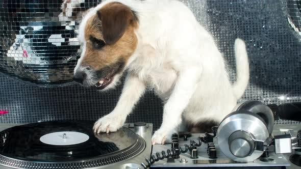 Thumbnail for Dog DJ