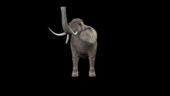 Elephant Eat