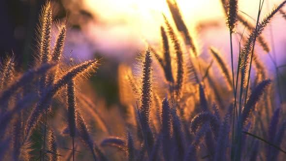 Thumbnail for Grass In Sunlight