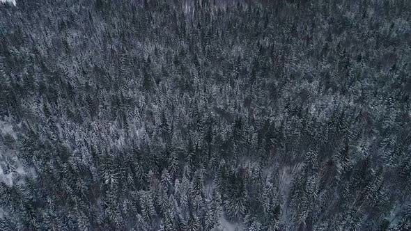 Aerial view of snowy forests in Estonia.