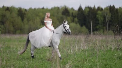 Romantic Bride is Walking on Horseback at Wedding Day Romantic View of Woman and White Horse