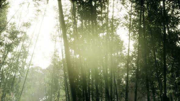 Thumbnail for Windy Tranquil Arashiyama Bamboo Grove
