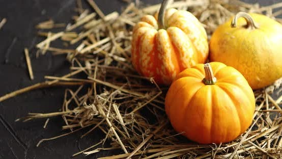 Thumbnail for Three Pumpkins on Pile of Hay