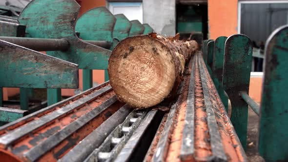 Thumbnail for Log Transport To Saw Line. Cutting Line in Saw Mill. Processing of Timber
