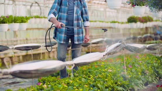 Thumbnail for Pesticide Sprayed on Flowering Plants at Greenhouse