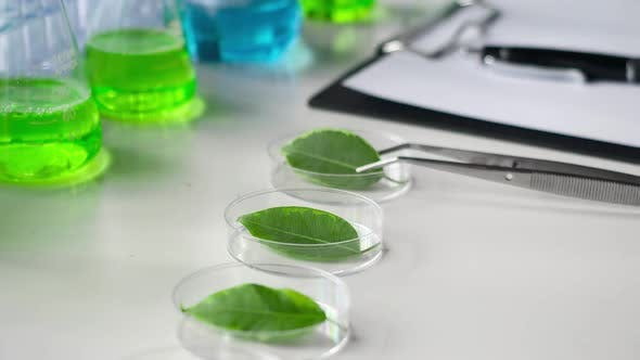 Thumbnail for Laboratory of Plant Genetic Modifications. Tweezers and Green Leaves in Petri Dishes
